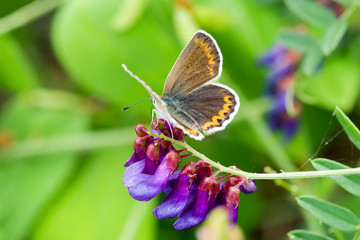 Butterfly on a flower in the wild on a blurry background