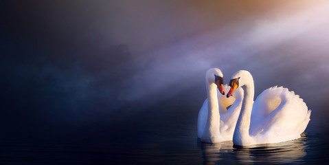 Art beautiful romance landscape; love couple white swan