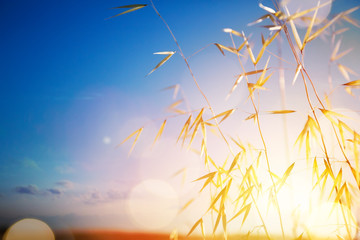 Art summer or autumn sunny nature background