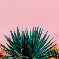 Plants on pink fashion concept. Aloe on pink wall background