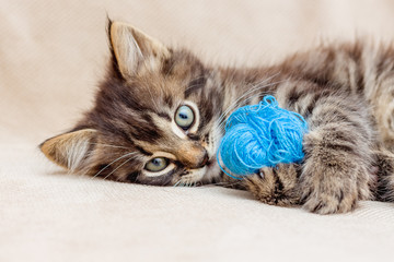 A small striped kitten is played with a blue threads_