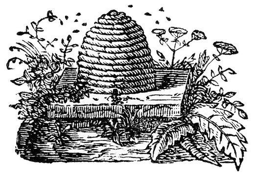 Bienenstock.aus: Marie Adenfeller, Friedrich Werner: Illustriertes Koch- und Haushaltungsbuch, Friedrichshagen 1899/1900, S. 63, Fig. 101.