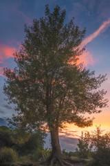 Beautiful Bushy Tree at Colorful Sunset