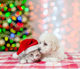 puppy kisses a kitten with red santa hat at a Christmas tree. Space for text