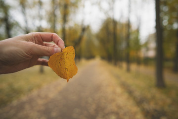 pov man hand holding autumn linden leaf while standing on alley