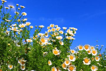 Wall Mural - Summer wildflowers