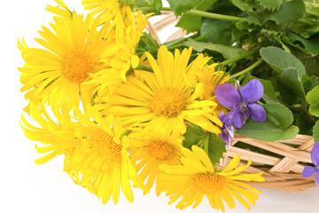 basket of medicinal plants