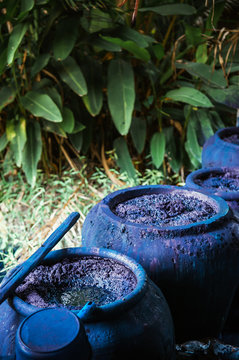 Process of making indigo dye, Indigo plant fermentation in clay pot