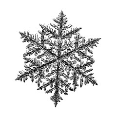 Snowflake on white background. This illustration based on macro photo of real snow crystal: complex stellar dendrite with fine hexagonal symmetry, ornate shape and six thin, elegant arms.