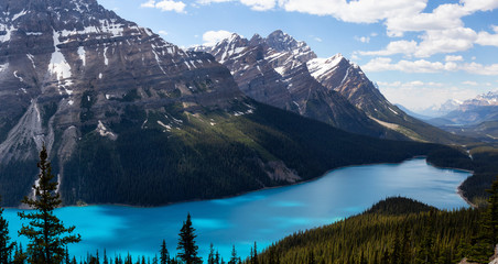 Peyto Lake viewed from the top of a mountain during a vibrant sunny day. Taken in Icefields Parkway, Banff National Park, Alberta, Canada.