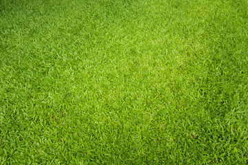 Tuinposter Gras Natural green sward background and texture, Top view green grass for nature background