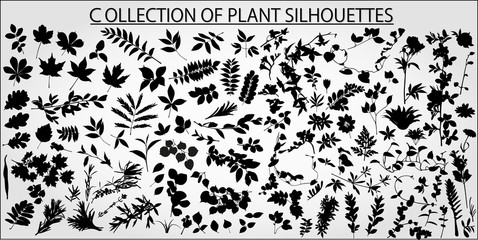 Collection of vector plants and leaves on a light background