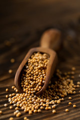 Heap of raw, unprocessed mustard seed kernels in wooden scoop on rustic wood table background