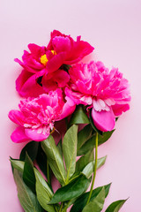 Beautiful magenta peony flower bouquet on the pink background. Closeup, flatlay style.