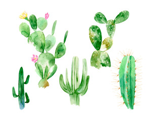 Set of watercolor cactus illustrations on white background in vector format. Hand drawn blooming plants set for office indoor. Blossom mexican cactus from desert.