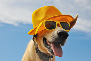 funny dog in summer hat and with sunglasses