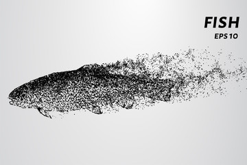 Fish from of particles. Trout swims in the water, leaving a trail of dots