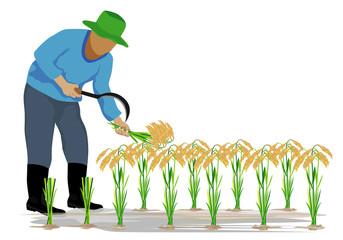 farmer harvest rice cartoon shape vector design