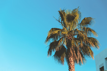 Tropical background of palm trees against blue sky.