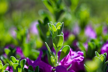 Green shrub with purple flowers floral abstract background