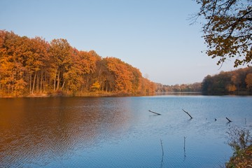 autumn midday landscape with forest and lake, seasonal background texture photo