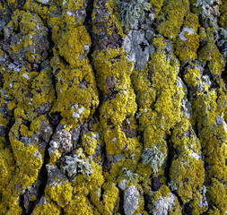 full frame mossy overgrown bark detail