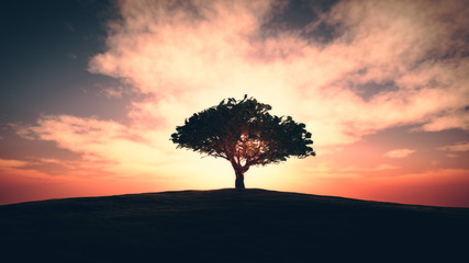 tree sunset in field