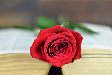 Valentines Day rose on the book