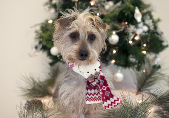 Terrier and Christmas Tree