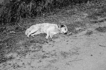 Black and white photo with a dead dog on the roadside