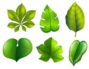 A se of different leaf