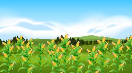 A corn farm landscapr