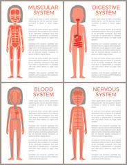 Blood Muscular Digestive and Nervous Systems Set