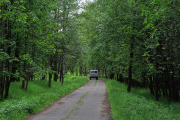 "Moscow region, Russia. National Park ""Elk island"". The car with the forester goes on a single-lane road in the forest"
