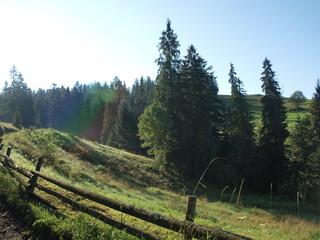 Fototapeta Górska łąka obraz