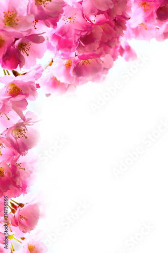 Holiday Background With Spring Pink Cherry Blossom Sakura Flowers