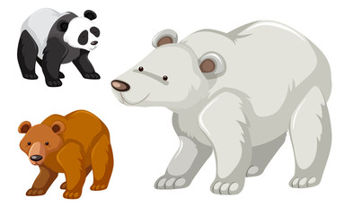 A type of bear set