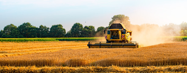 big combine harvester threshing in the sunset. Wall mural