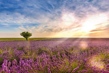 Crépuscule dans un Champ de lavande à Valensole en Provence, France