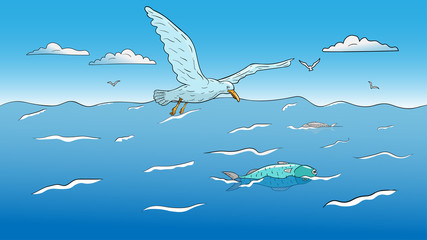 Seagull hunting on dead fish.
