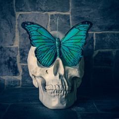 Foto auf AluDibond Schmetterlinge im Grunge Skull with butterfly on a background of rough stone wall. Grunge style