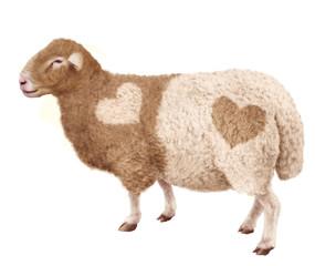 mouton, brebis, agneau, laine, amour, blanc et brun, lait, coeur, amour de mouton, illustration, photo