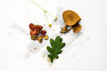 Fresh mushroom and leaf on dirty white background.