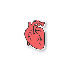 Human heart anatomy patch
