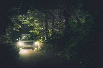 Wall Mural - NIght Drive Trough the Forest