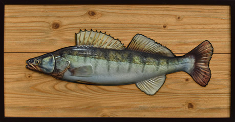 varnished zander on a background of a wooden texture