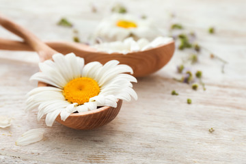 Spoon with beautiful chamomile flower on wooden background
