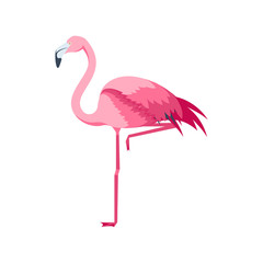 Cartoon Pink Flamingo Bird Set. Vector