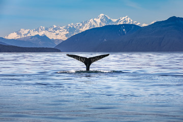 Scenic Alaska with a whale tail in the foreground