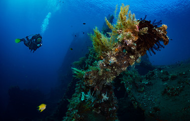 Woman diver on the wreck of the USS Liberty, Tulamben, Bali, Indonesia